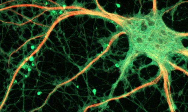 Neuroscience in society