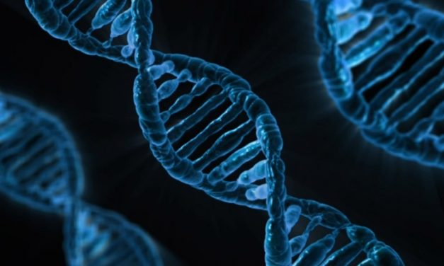 How Do Our Genes Work?