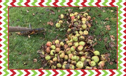 Day 19 – Shambles Advent