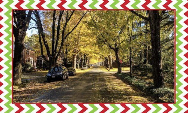 Day 3 – Shambles Advent