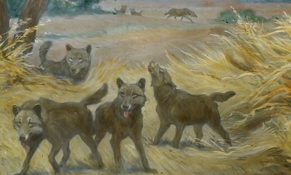 Can I Have a Direwolf? – Brenna Hassett