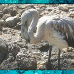 Algae Omega 3 and a Flamingo – Day 4 – Sea Shambles Advent