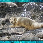 Internet of Seals – Sea Shambles Advent Day 12