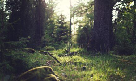 Mental Health Hacks Explained: The Benefits of Outside – Dean Burnett